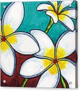 Frangipani Delight Acrylic Print