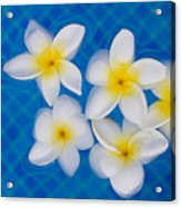 Frangipani Flowers In Water Acrylic Print