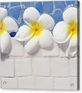 Frangipani Flowers Acrylic Print by Laura Leyshon