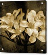 Frangipani In Sepia Acrylic Print