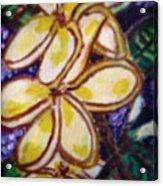 Frangipani In The Tropics  Series 1 Acrylic Print