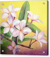 Frangipanier Acrylic Print