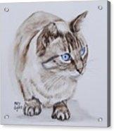 Frankie The Cat Acrylic Print