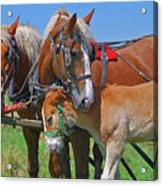 Franklinville Plowfest 1417b Acrylic Print