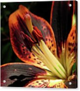 Freckled Forever Susan Lily Acrylic Print
