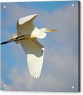 Free Flying Acrylic Print