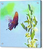 Free To Fly - Butterfly In Flight Acrylic Print