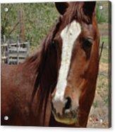 Freedom Horse Acrylic Print