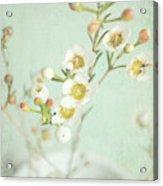 Freesia Blossom Acrylic Print