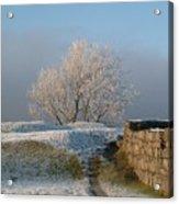 Freezing Tree Acrylic Print