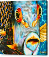 French Angelfish Face Acrylic Print