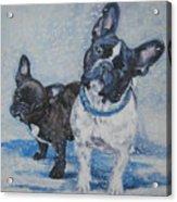 French Bulldog Mom And Pup Acrylic Print