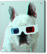 French Bulldog With 3d Glasses Acrylic Print
