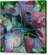 French Hydrangea Rainbow Acrylic Print