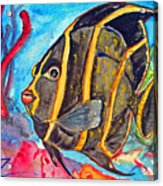 French Kiss-juvenile French Angelfish Acrylic Print by Kelly     ZumBerge