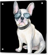 Frenchie French Bulldog Aviators Dogs In Clothes Acrylic Print
