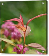 Fresh Colors Of Summer Acrylic Print