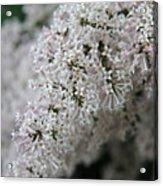 Fresh Lilac Perfume Acrylic Print