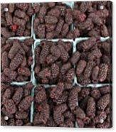 Fresh Marionberries Acrylic Print