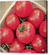 Fresh Ripe Tomatoes Acrylic Print
