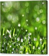 Fresh Spring Morning Dew Acrylic Print