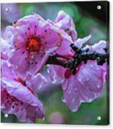 Fresh Spring Rain Acrylic Print