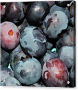 Freshly Picked Blueberries Acrylic Print