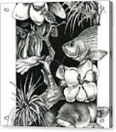 Freshwater Collage Acrylic Print