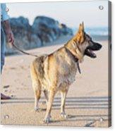 German Shepherd With Man On The Beach Acrylic Print
