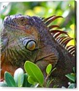 Friendly Iguana Acrylic Print
