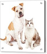 Friendly Pit Bull Dog And Pretty Cat Acrylic Print