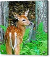 Friends Of The Forest  Acrylic Print