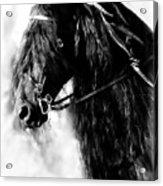 Friesian Horse Beauty Acrylic Print