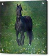 Friesian Mist Acrylic Print