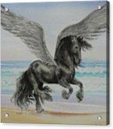 Friesian Pegasus Acrylic Print