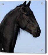 Friesian Stallion Acrylic Print