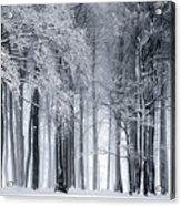 Frigid Forest Acrylic Print