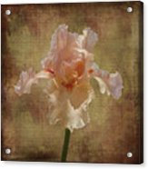 Frilly Iris Acrylic Print