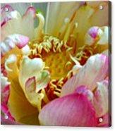 Frilly Lotus Acrylic Print
