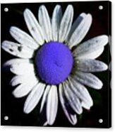 Fringe - Blue Flower Acrylic Print