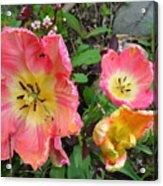 Fringed Tulips Acrylic Print