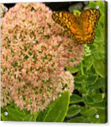 Fritillary On Flower Acrylic Print
