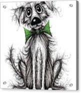 Frizzy Dog Acrylic Print