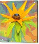 Frog A Lilly 2  - Photos Bydebbiemay Acrylic Print