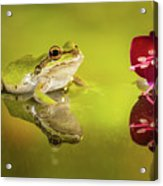 Frog And Fuchsia With Reflections Acrylic Print