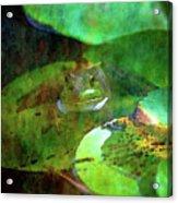 Frog And Lily Pad 3076 Idp_2 Acrylic Print