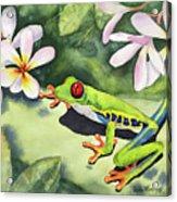 Frog And Plumerias Acrylic Print
