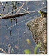 Frog At Pond Acrylic Print