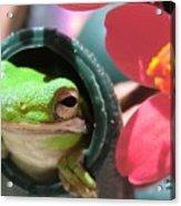 Frog At Selby Acrylic Print