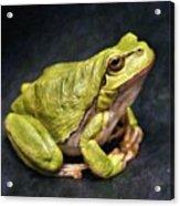 Frog - Id 16236-105016-7750 Acrylic Print